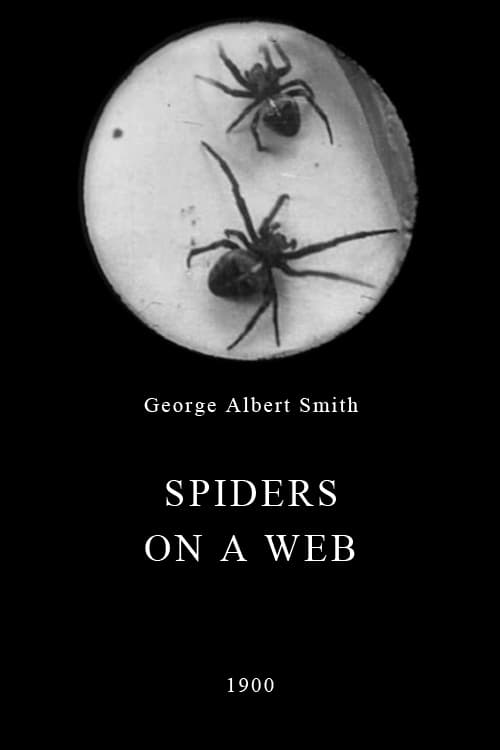 Spiders on a Web
